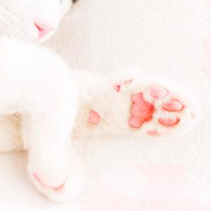 dolcezza del gatto che dorme